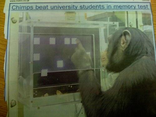 Chimp_3